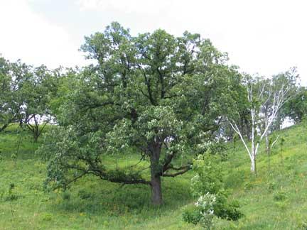 Ecology Of Savanna Plants