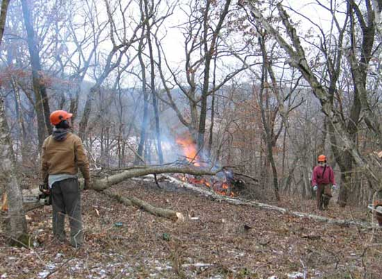 It Is Best Carried Out In The Winter Preferably With A Light Snow Cover So That Brush Piles Can Be Burned Without Any Problems
